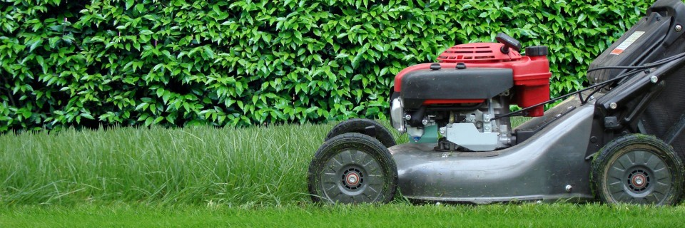 Lawn care maintenance company calgary apex landscaping for Professional garden maintenance